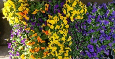 blommor-htc-10-480x245