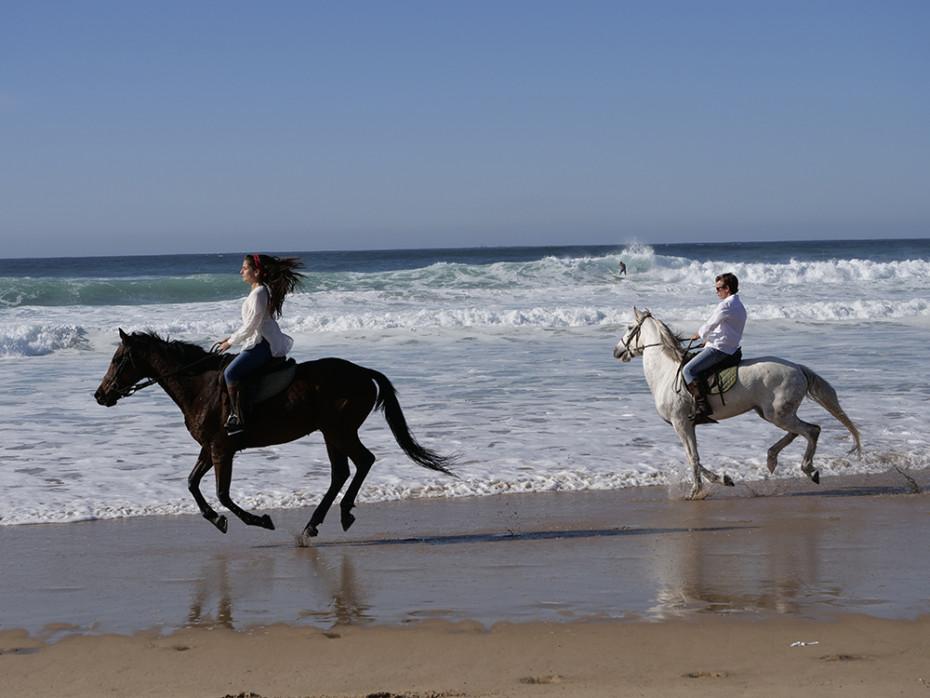 Fokusspårningen behåller enkelt skärpan på hästar i full galopp. (Foto: Lasse Svendsen)